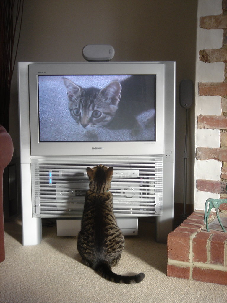 Cat_watching_himself_on_TV.jpg