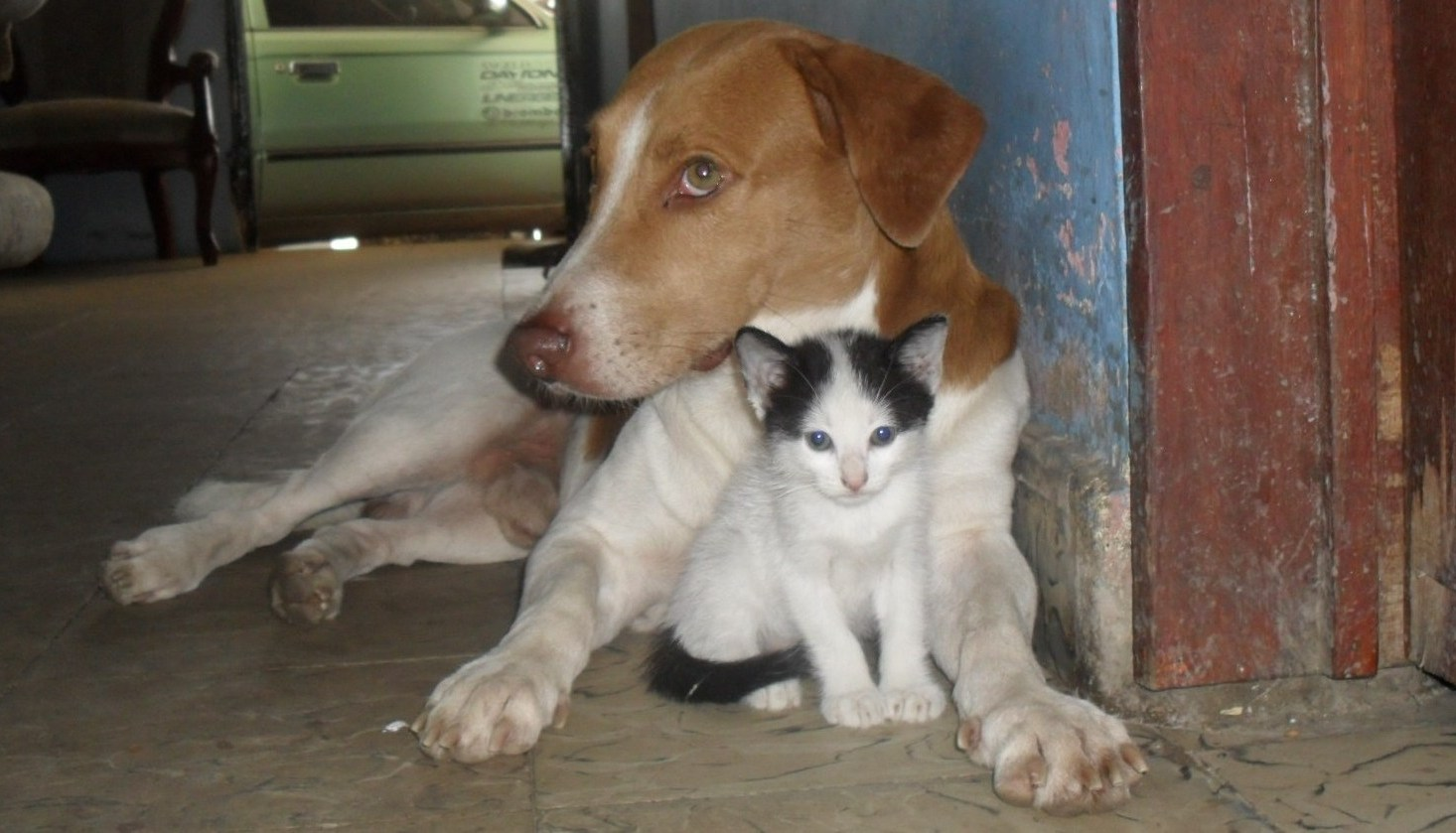 Cat and dog.JPG