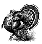 TurkeyDrawing.flickrCC.LovelornPoets